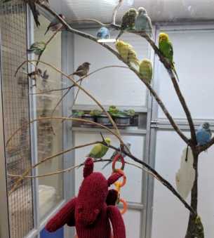 Jo dragon with her budgie friends